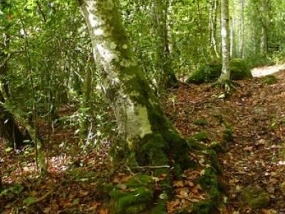 Cañones y nacimento del Ebro - Monte Hijedo;fotos de senderismo;rutas trekking